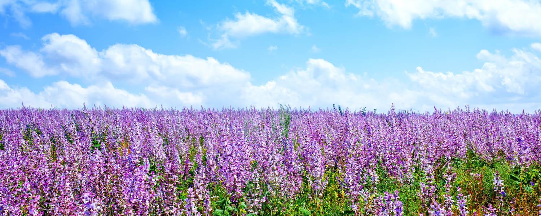 Varenya Essentials Aromatherapy & Essential Oils